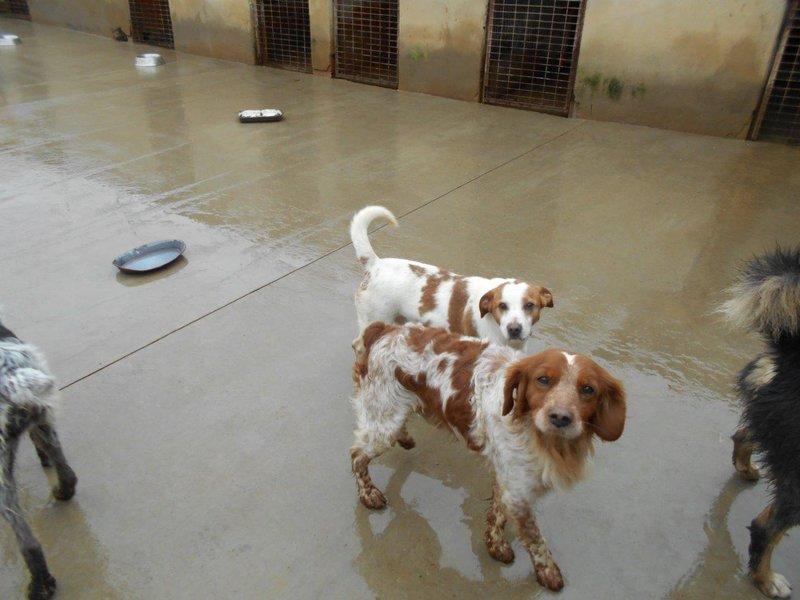 Bildertagebuch - Figo: ein SUPER- Familienhund - VERMITTELT! 28377076jv