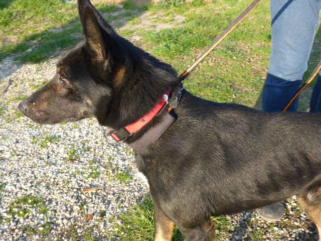 Bildertagebuch - Ciro: freundlicher und verträglicher Hund, im allerbestem Alter...Vermittlung über Procanalba... 28386296on
