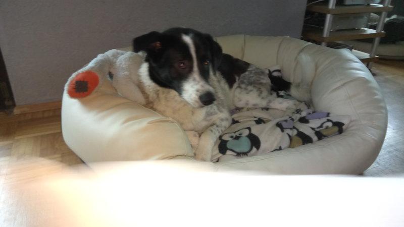 Bildertagebuch - Alwin, ein Junghund vom Pech verfolgt, hofft auf das große Glück...VERMITTELT! 28396029ht