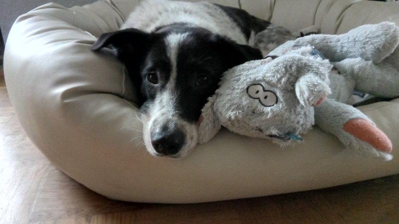 Bildertagebuch - Alwin, ein Junghund vom Pech verfolgt, hofft auf das große Glück...VERMITTELT! 28396041ky