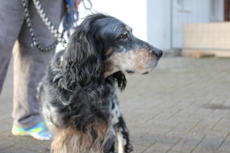 Bildertagebuch - Fley: unglaublich süßes älteres Hundemädchen wünscht sich ein liebevolles Zuhause- VERMITTELT! 28399290zr