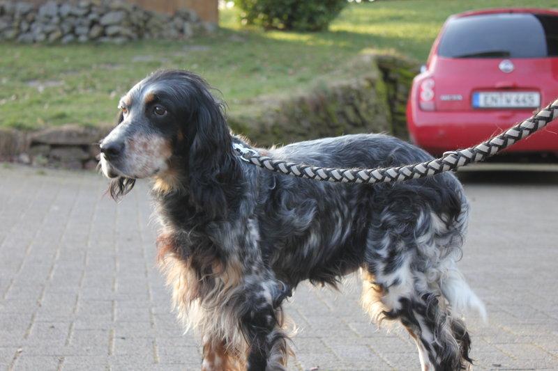 Bildertagebuch - Fley: unglaublich süßes älteres Hundemädchen wünscht sich ein liebevolles Zuhause- VERMITTELT! 28399294ul