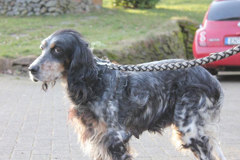 Bildertagebuch - Fley: unglaublich süßes älteres Hundemädchen wünscht sich ein liebevolles Zuhause- VERMITTELT! 28399296hr