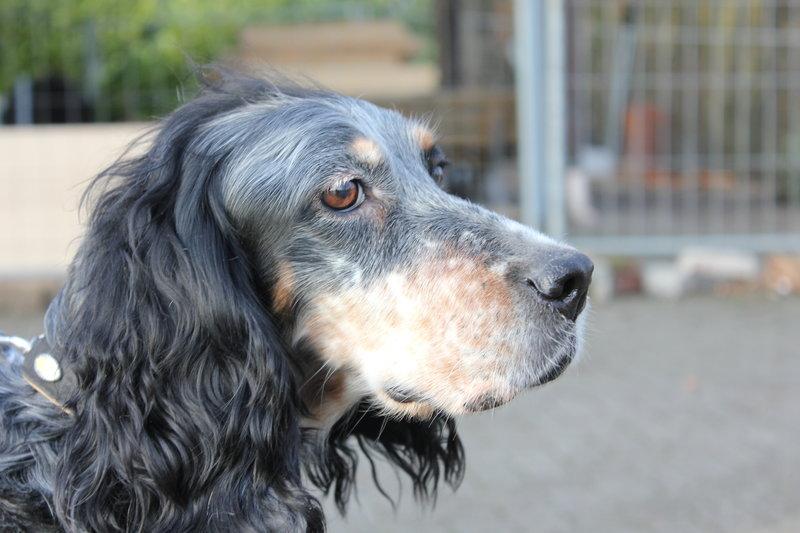Bildertagebuch - Fley: unglaublich süßes älteres Hundemädchen wünscht sich ein liebevolles Zuhause- VERMITTELT! 28399303vo