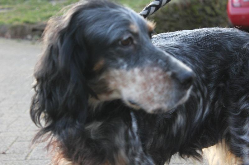 Bildertagebuch - Fley: unglaublich süßes älteres Hundemädchen wünscht sich ein liebevolles Zuhause- VERMITTELT! 28399306xh