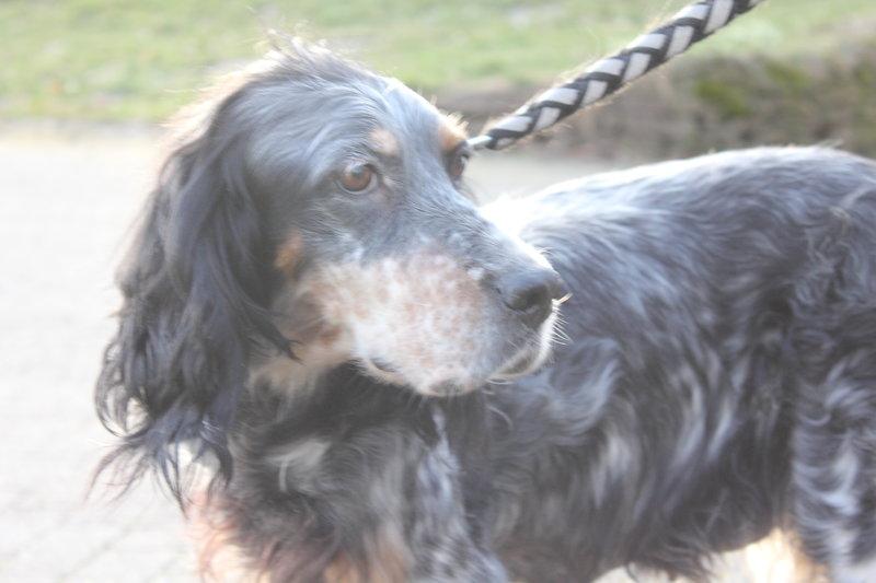 Bildertagebuch - Fley: unglaublich süßes älteres Hundemädchen wünscht sich ein liebevolles Zuhause- VERMITTELT! 28399308qu