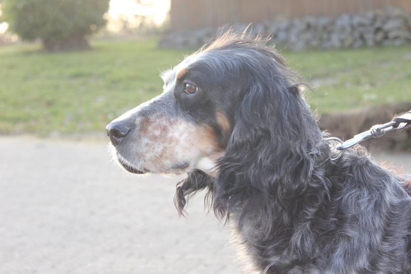 Bildertagebuch - Fley: unglaublich süßes älteres Hundemädchen wünscht sich ein liebevolles Zuhause- VERMITTELT! 28399309uj