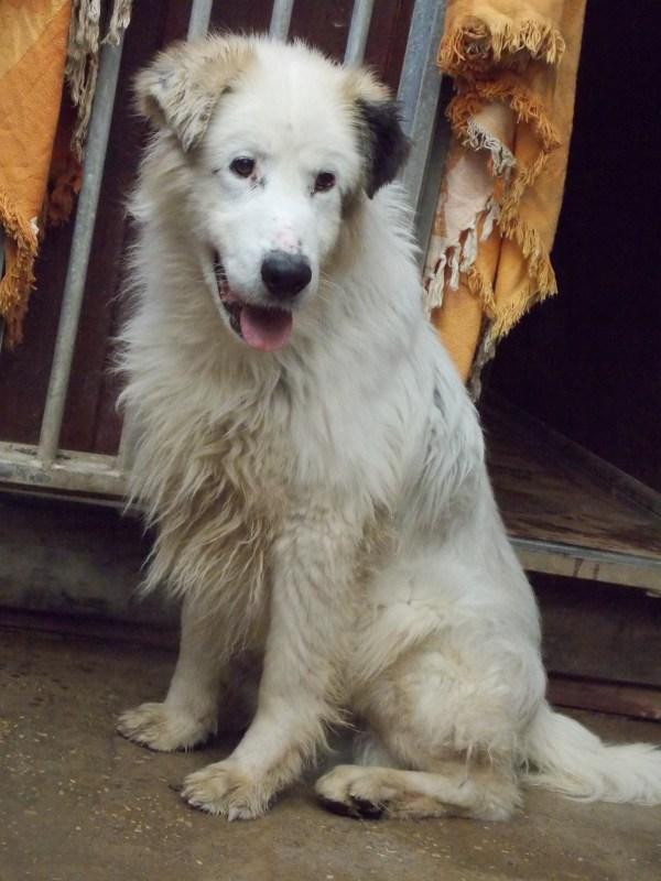 Bildertagebuch - Bombastus, freundlicher Hundeopi sucht ein warmes kuscheliges Zuhause - über ANDERE ORGA VERMITTELT! 28411097no