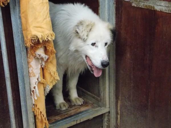 Bildertagebuch - Bombastus, freundlicher Hundeopi sucht ein warmes kuscheliges Zuhause - über ANDERE ORGA VERMITTELT! 28411099tv