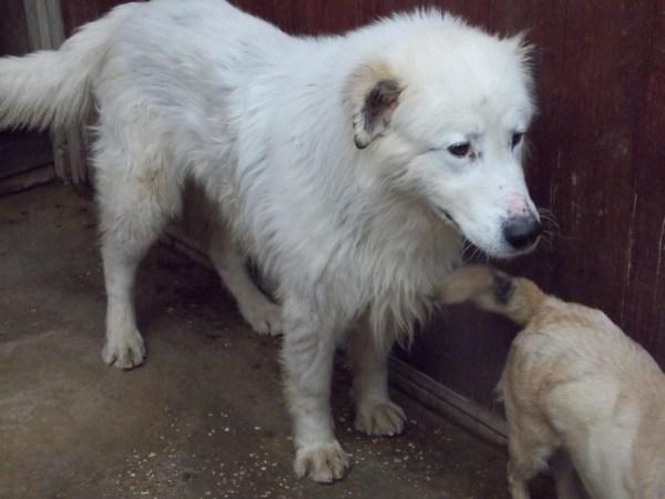 Bildertagebuch - Bombastus, freundlicher Hundeopi sucht ein warmes kuscheliges Zuhause - über ANDERE ORGA VERMITTELT! 28411100cz