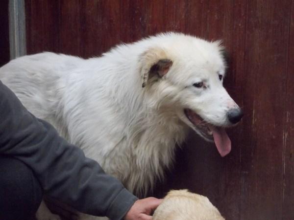 Bildertagebuch - Bombastus, freundlicher Hundeopi sucht ein warmes kuscheliges Zuhause - über ANDERE ORGA VERMITTELT! 28411101eb