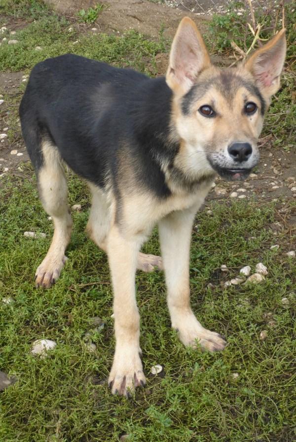 Bildertagebuch - Nino, ein ganz lieber Hundeschatz der es in seinem kurzen Leben bisher schwer gehabt hat ... 28411241wy