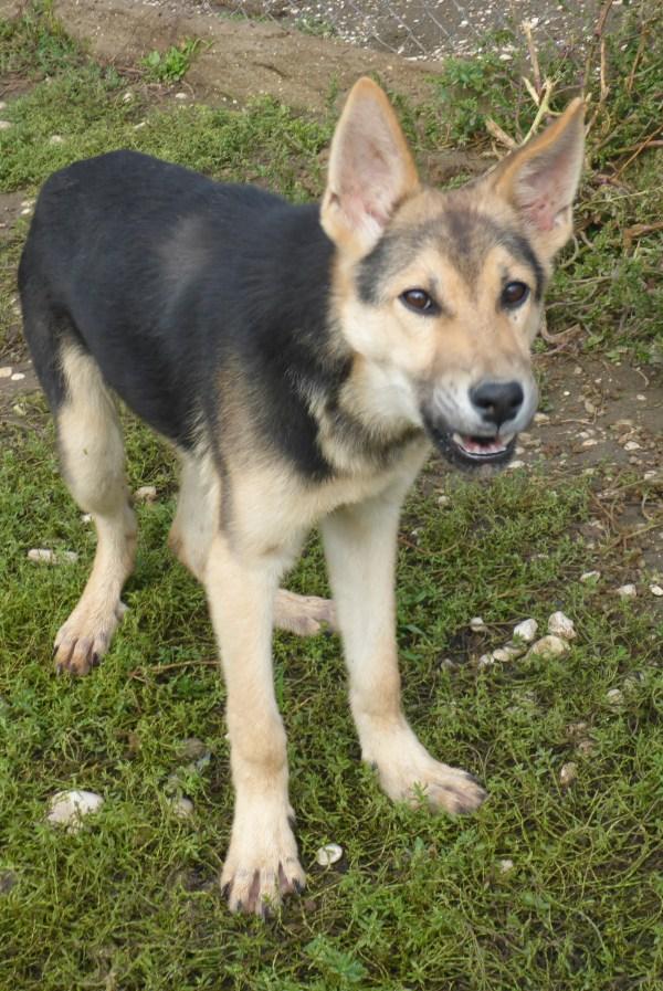 Bildertagebuch - Nino, ein ganz lieber Hundeschatz der es in seinem kurzen Leben bisher schwer gehabt hat ... 28411242vy