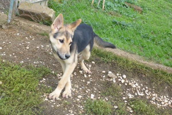 Bildertagebuch - Nino, ein ganz lieber Hundeschatz der es in seinem kurzen Leben bisher schwer gehabt hat ... 28411244fp