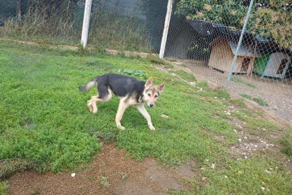 Bildertagebuch - Nino, ein ganz lieber Hundeschatz der es in seinem kurzen Leben bisher schwer gehabt hat ... 28411245qs