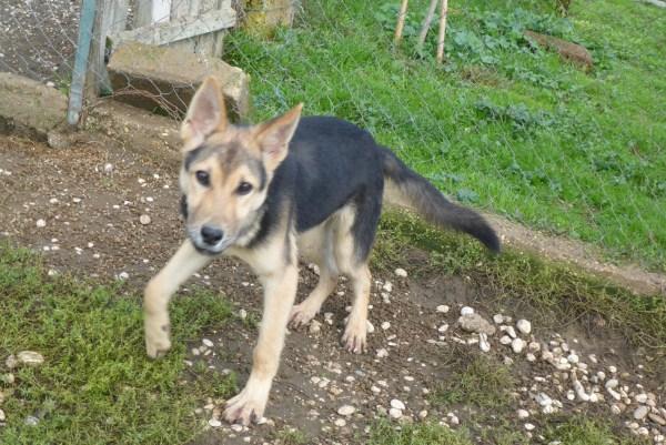 Bildertagebuch - Nino, ein ganz lieber Hundeschatz der es in seinem kurzen Leben bisher schwer gehabt hat ... 28411247rn
