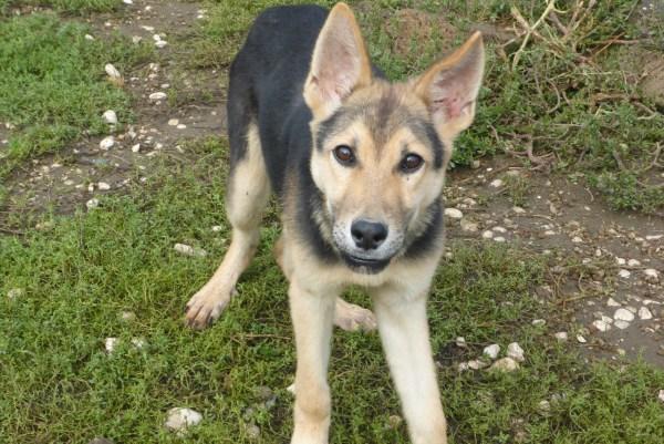 Bildertagebuch - Nino, ein ganz lieber Hundeschatz der es in seinem kurzen Leben bisher schwer gehabt hat ... 28411248th