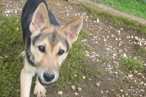 Bildertagebuch - Nino, ein ganz lieber Hundeschatz der es in seinem kurzen Leben bisher schwer gehabt hat ... 28411250fh