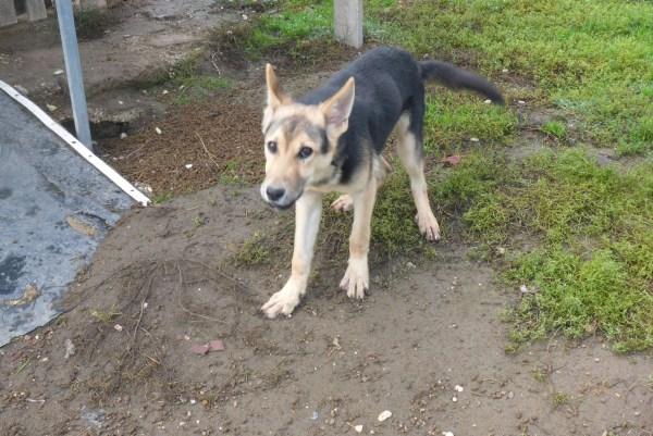 Bildertagebuch - Nino, ein ganz lieber Hundeschatz der es in seinem kurzen Leben bisher schwer gehabt hat ... 28411263wn