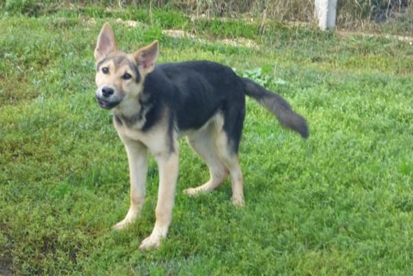 Bildertagebuch - Nino, ein ganz lieber Hundeschatz der es in seinem kurzen Leben bisher schwer gehabt hat ... 28411265in