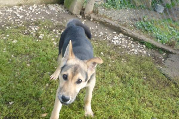 Bildertagebuch - Nino, ein ganz lieber Hundeschatz der es in seinem kurzen Leben bisher schwer gehabt hat ... 28411266ay
