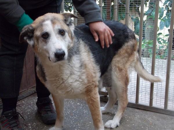 Bildertagebuch - Dora, eine ganz liebe Seele von Hundeomi sucht ein liebevolles Sofa - über ANDERE ORGA VERMITTELT! 28411448ry