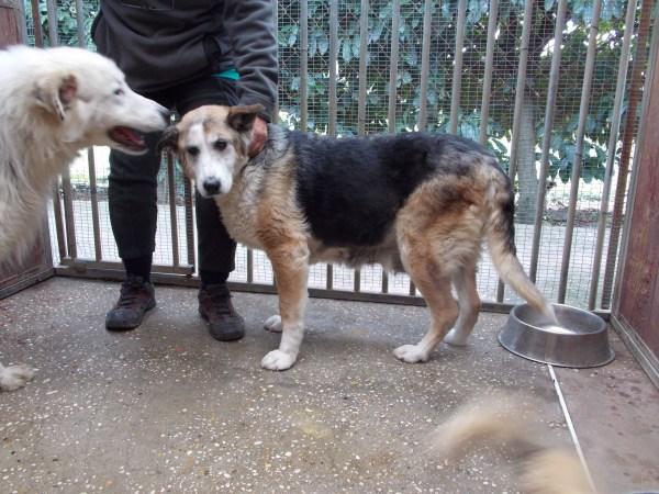 Bildertagebuch - Dora, eine ganz liebe Seele von Hundeomi sucht ein liebevolles Sofa - über ANDERE ORGA VERMITTELT! 28411449hl
