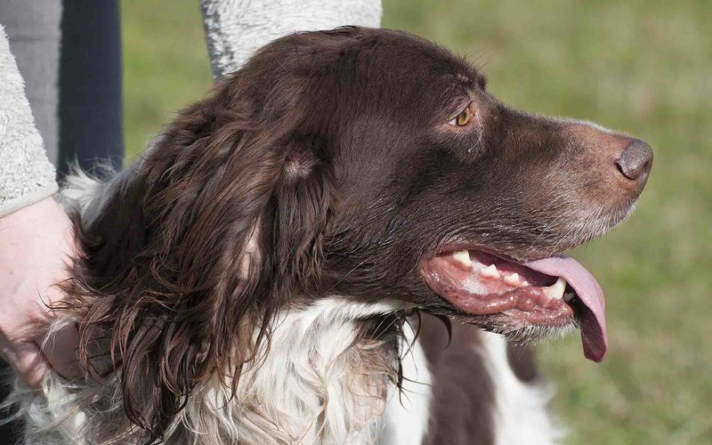 Bildertagebuch - Rufus, ein lieber und verschmuster Kerl der ein sportliches Zuhause sucht ...VERMITTELT! 28430724ph