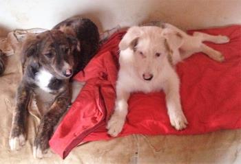 Bildertagebuch - Aron: jung, hübsch und ein toller Charakter, ein prima Familienhund- über ANDERE ORGA VERMITTELT! 28430978rv
