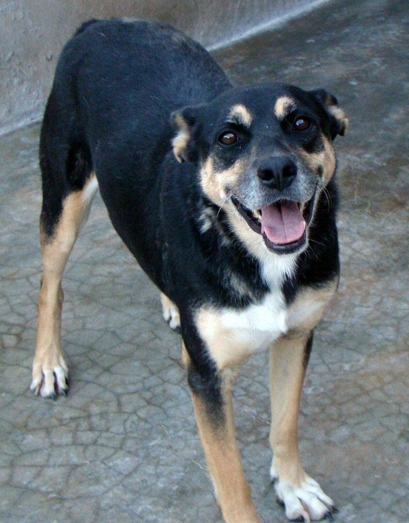 Bildertagebuch - Kenya: liebevolle und gehorsame Hundedame mit einem großen Herz wartet schon seit 6 Jahren...VERMITTELT! 28450238lt