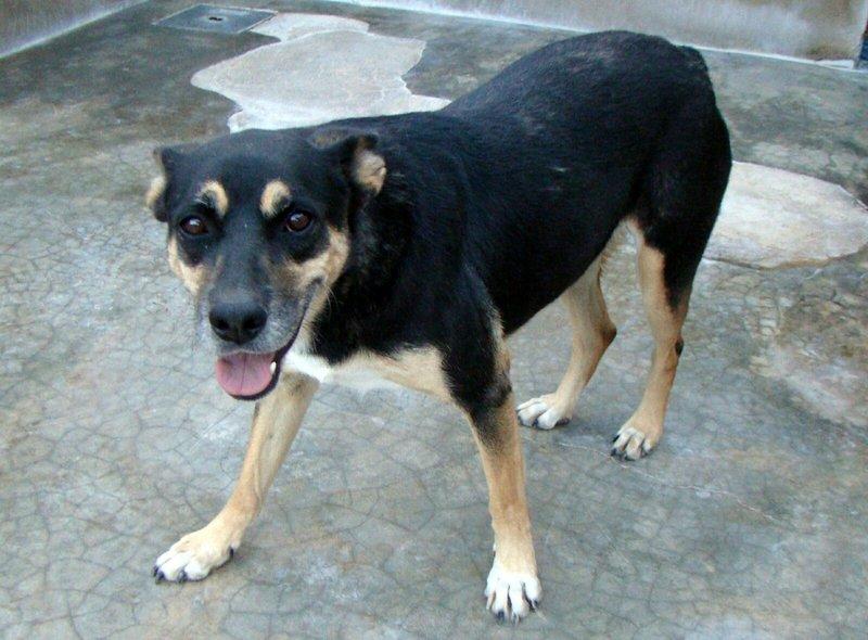 Bildertagebuch - Kenya: liebevolle und gehorsame Hundedame mit einem großen Herz wartet schon seit 6 Jahren...VERMITTELT! 28450239ha