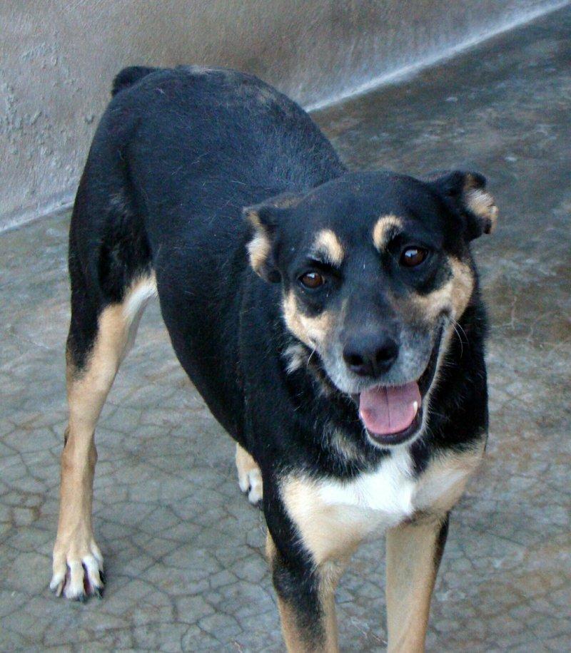 Bildertagebuch - Kenya: liebevolle und gehorsame Hundedame mit einem großen Herz wartet schon seit 6 Jahren...VERMITTELT! 28450240um