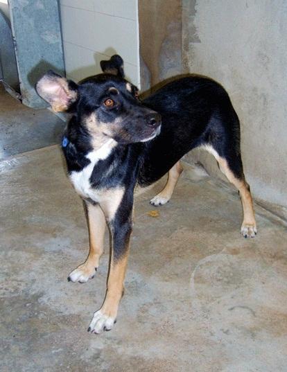 Bildertagebuch - Kenya: liebevolle und gehorsame Hundedame mit einem großen Herz wartet schon seit 6 Jahren...VERMITTELT! 28450241wi