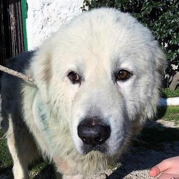 Bildertagebuch - Gaston, lieber weißer Bär der ein liebevolles Zuhause mit einem Garten sucht...RESERVIERT! 28517862mc