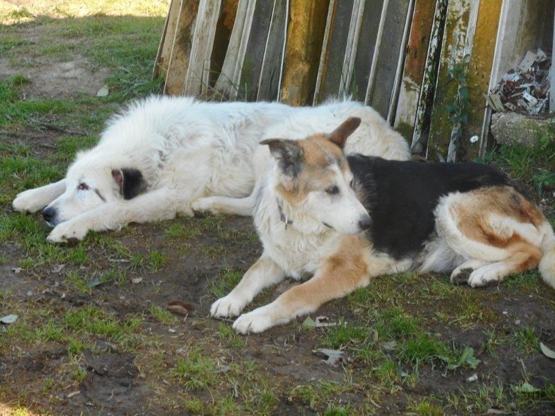 Bildertagebuch - Bombastus, freundlicher Hundeopi sucht ein warmes kuscheliges Zuhause - über ANDERE ORGA VERMITTELT! 28550548lv