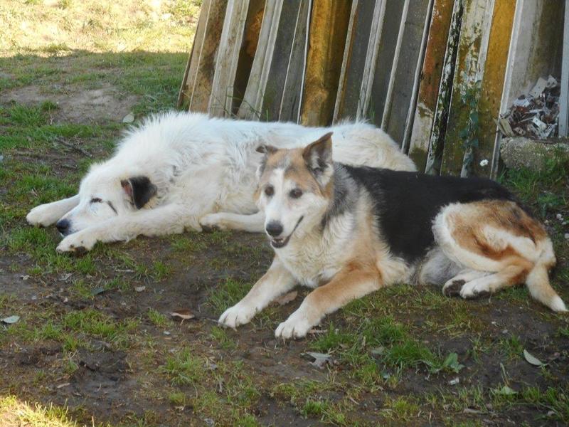 Bildertagebuch - Dora, eine ganz liebe Seele von Hundeomi sucht ein liebevolles Sofa - über ANDERE ORGA VERMITTELT! 28550709wh