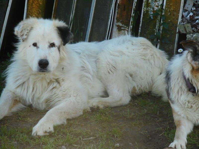 Bildertagebuch - Dora, eine ganz liebe Seele von Hundeomi sucht ein liebevolles Sofa - über ANDERE ORGA VERMITTELT! 28550717mf