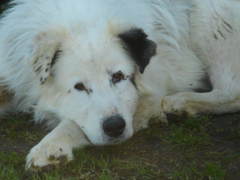 Bildertagebuch - Dora, eine ganz liebe Seele von Hundeomi sucht ein liebevolles Sofa - über ANDERE ORGA VERMITTELT! 28550719ie