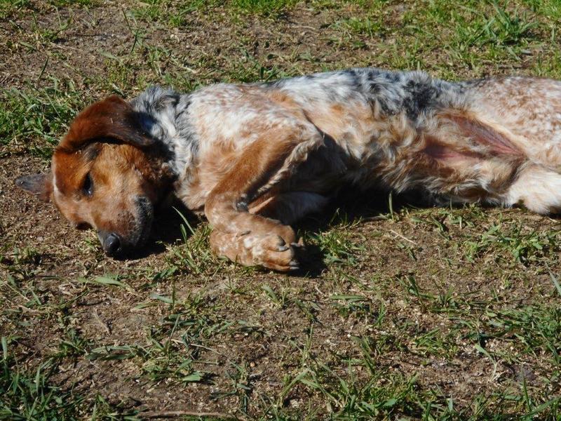 Bildertagebuch - Ferdie: trauriger Hundemann, der sich sehnlichst ein Zuhause wünscht- VERMITTELT! 28550911ge