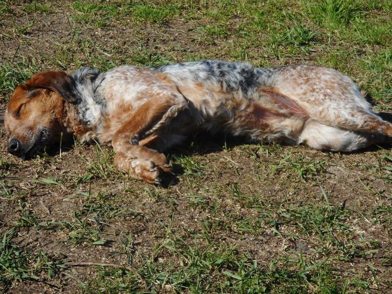 Bildertagebuch - Ferdie: trauriger Hundemann, der sich sehnlichst ein Zuhause wünscht- VERMITTELT! 28550912iy