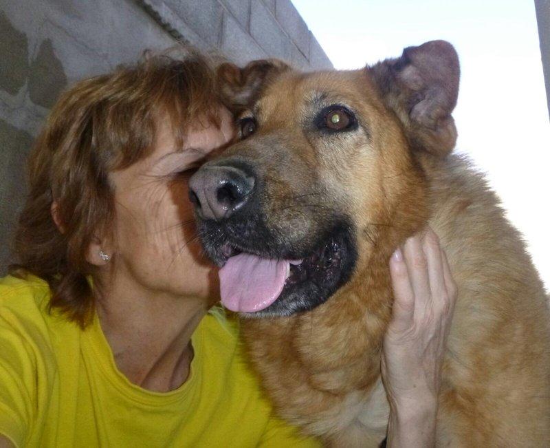 Bildertagebuch - Talca: entzückende, ältere Schäferhunddame sucht Liebe und Verständnis! 28657475gh