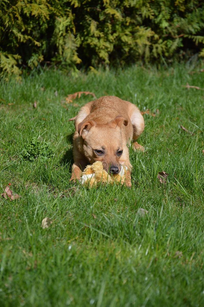 Bildertagebuch - Mia, süßes kleines Mäuschen wurde von der Straße gerettet ... - VERMITTELT! 28705965ka
