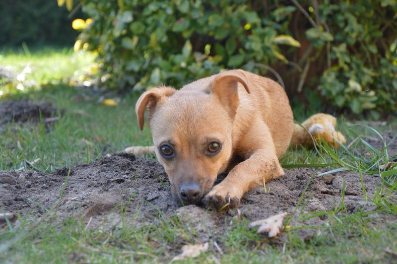 Bildertagebuch - Mia, süßes kleines Mäuschen wurde von der Straße gerettet ... - VERMITTELT! 28705969hq