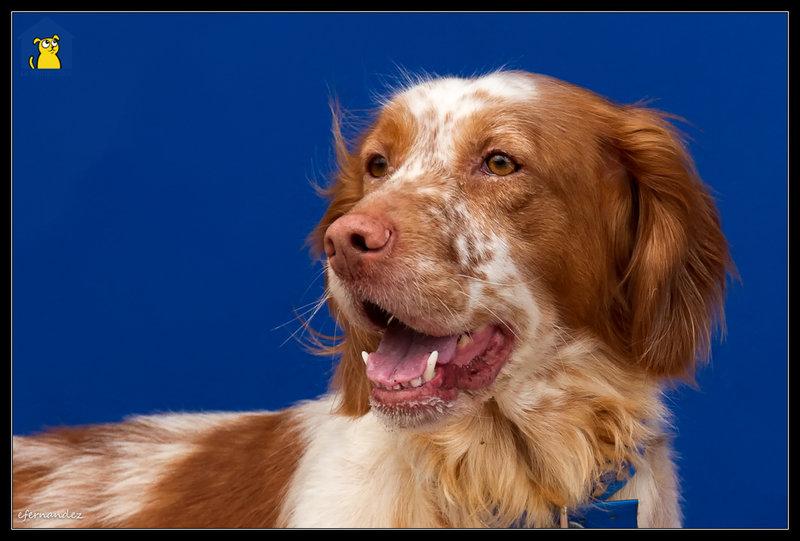 Bildertagebuch - Nela: wünscht sich einen kuschligen Hundekorb, einen vollen Futternapf und liebe Menschen - VERMITTELT! 28738193jy