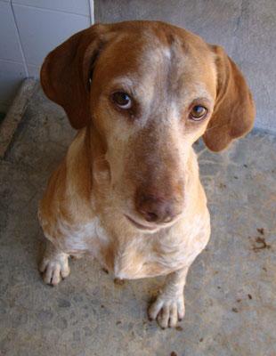 Bildertagebuch - Trapo: ein absoluteter Traumhund, der  bisher kein schönes Leben hatte! - in Spanien ZUHAUSE GEFUNDEN! 28738541ue