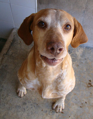 Bildertagebuch - Trapo: ein absoluteter Traumhund, der  bisher kein schönes Leben hatte! - in Spanien ZUHAUSE GEFUNDEN! 28738543mm