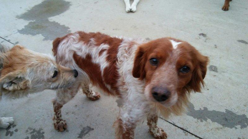 Bildertagebuch - Figo: ein SUPER- Familienhund - VERMITTELT! 28766942ih