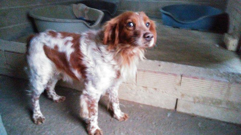 Bildertagebuch - Figo: ein SUPER- Familienhund - VERMITTELT! 28766945jf