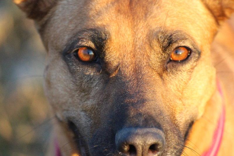 Bildertagebuch - Lina II, ein hübsche Lady die gerne Bällchen spielt und eine hundeerfahrene aktive Familie sucht ...VERMITTELT! 28773715no