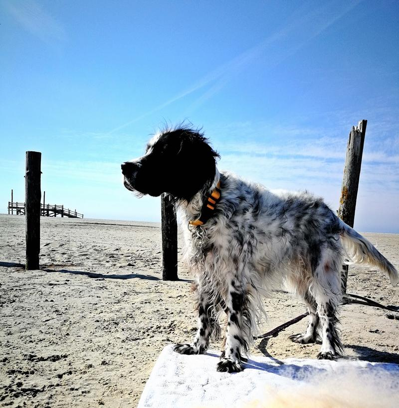 Bildertagebuch - Ginger lebt jetzt als Dauerpflegehund bei ihrer Pflegefamilie 28867748sx
